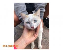 Gato encontrado en La Garita - Imagen 3