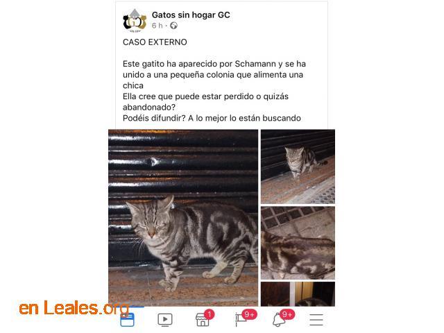 ENCONTRADO SCHAMANN HERIDO.  LO CONOCES? - 5