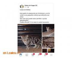 ENCONTRADO SCHAMANN HERIDO.  LO CONOCES? - Imagen 5