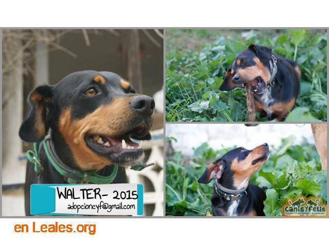 Adopta a Walter