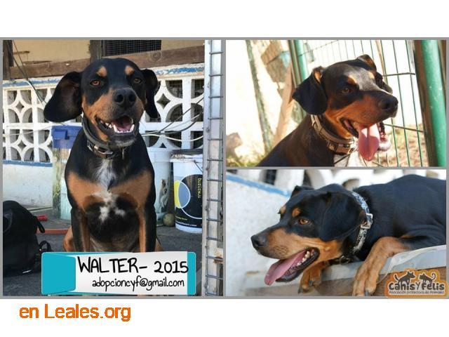 Adopta a Walter - 2