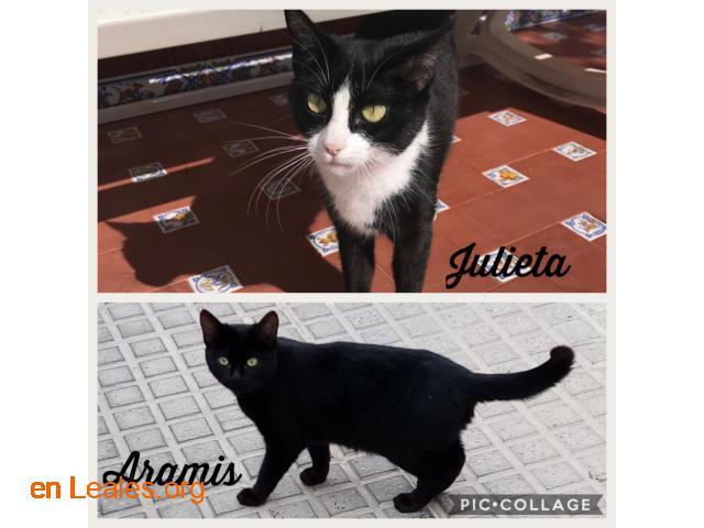 Acogida urgente para Aramis y Julieta - 1
