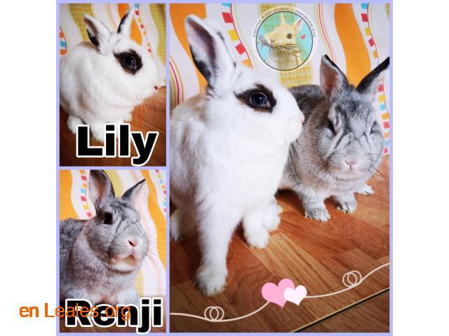 Lily y Reji en adopción conjunta