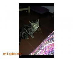 Ya adoptada - Imagen 3