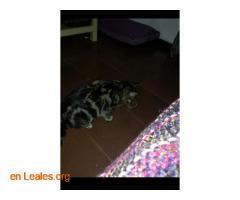 Ya adoptada - Imagen 4