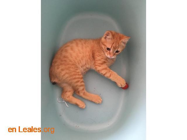 Gato perdido desde unos 2/3 días