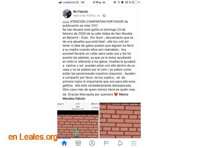 PERDIDO EN GUÍA.  LO HAS VISTO? - 3