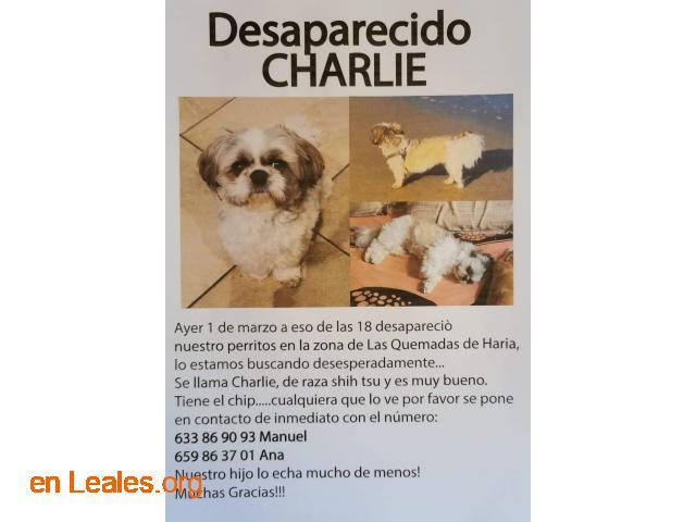 URGENTE: desaparecidos Charlie