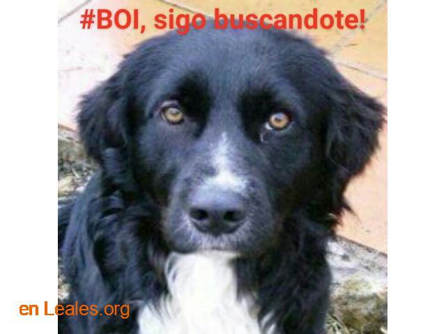 Busco a #BOI desde 6 junio 2016 - 5