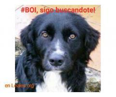 Busco a #BOI desde 6 junio 2016 - Imagen 5