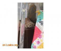 Gato encontrado - Imagen 1
