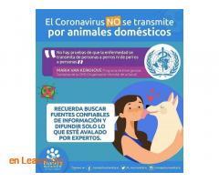 Puedes sacar perro y alimentar colonias - Imagen 2