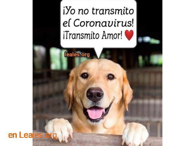 Puedes sacar perro y alimentar colonias - 3