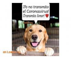 Puedes sacar perro y alimentar colonias - Imagen 3