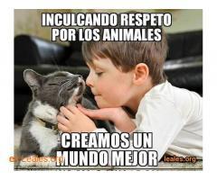 Puedes sacar perro y alimentar colonias - Imagen 6