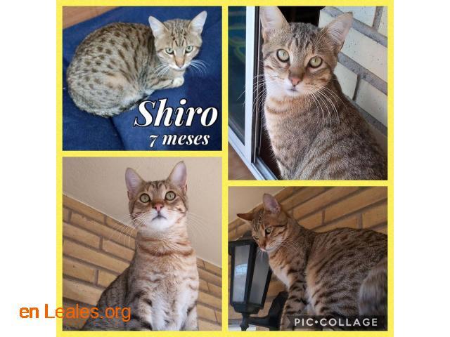Shiro y Bugatti