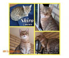 Shiro y Bugatti - Imagen 1
