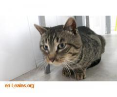 Gato macho muy cariñoso - Imagen 1