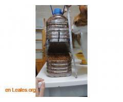 Comedero automático de colonias de gatos - Imagen 1