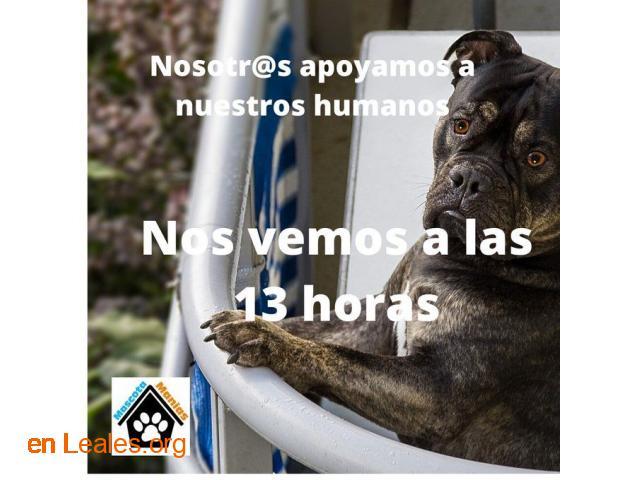 Saca a tu mascota a la ventana a las 13h - 1