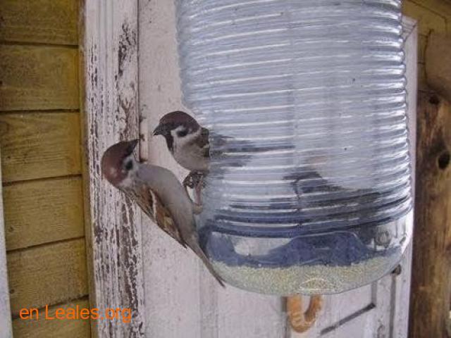 Las aves de ciudad se mueren de hambre