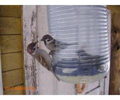 Las aves de ciudad se mueren de hambre - Imagen 1