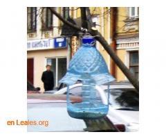 Las aves de ciudad se mueren de hambre - Imagen 2