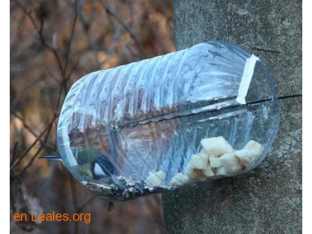 Las aves de ciudad se mueren de hambre - 3