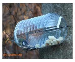 Las aves de ciudad se mueren de hambre - Imagen 3