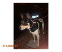 Perro macho encontrado en El Calero - Imagen 1