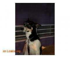 Perro macho encontrado en El Calero - Imagen 2