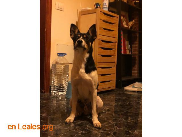 Perro macho encontrado en El Calero - 3