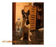 Perro macho encontrado en El Calero - Imagen 3