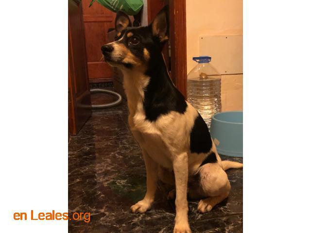 Perro macho encontrado en El Calero - 4
