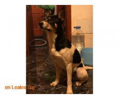 Perro macho encontrado en El Calero - Imagen 4