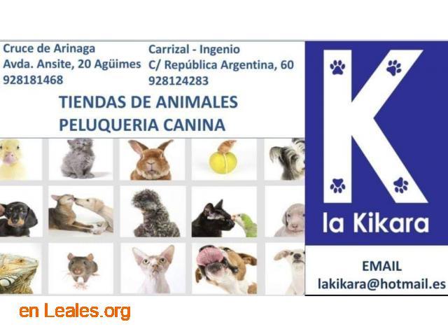 La Kikara - 1