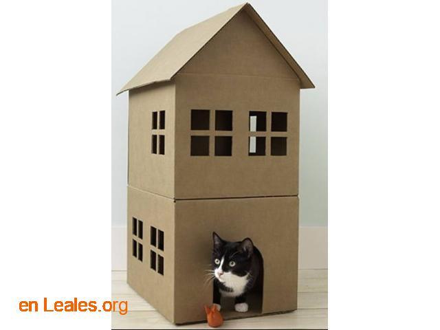 Me ofrezco de casa de acogida felina - 1