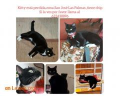 KITTY ESTA DESAPARECIDA - Imagen 1