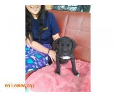 Cachorros en adopción responsable - Imagen 1