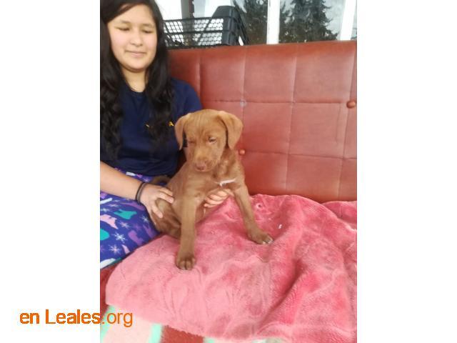 Cachorros en adopción responsable - 2