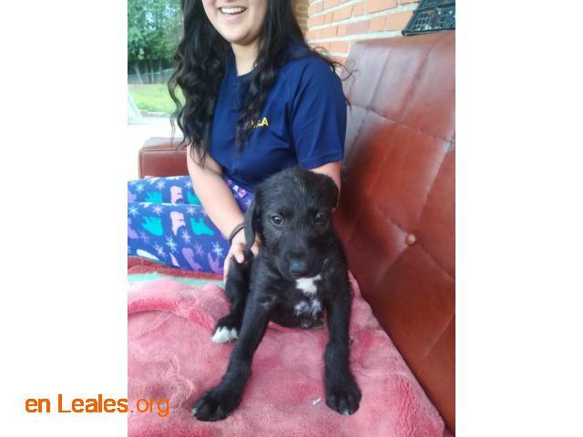 Cachorros en adopción responsable - 3