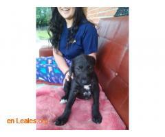 Cachorros en adopción responsable - Imagen 3