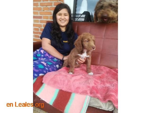 Cachorros en adopción responsable - 4