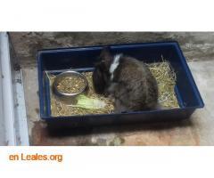 Conejita en adopción - Imagen 1