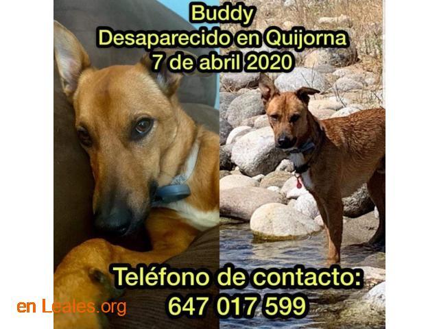 Buddy (Badi) desaparecido