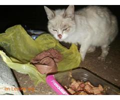 Poner comida gatos Mercadona Carrizal - Imagen 1