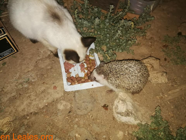 Todos los animales necesitan comer - 1