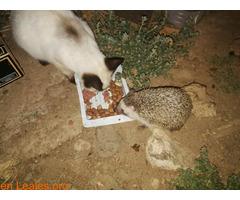Todos los animales necesitan comer - Imagen 1