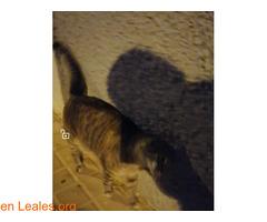 ver foto - Imagen 3