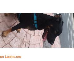 Cachorrito en adopción - Imagen 1